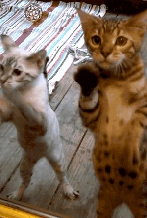 Cats want in. (GIF)