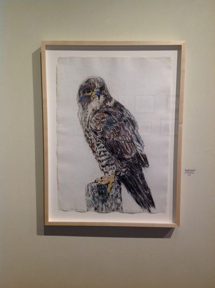 """Yuristy - """"Peregrine Falcon"""""""