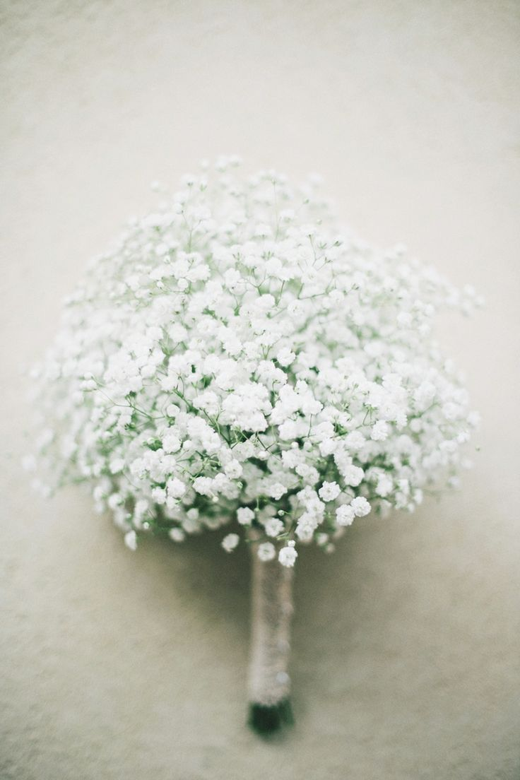 Delicate Blooms Photographed by Ben Yew (Western Australia) / View on The LANE