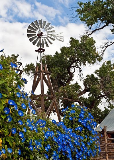 Blue morning glories growing on an old farm windmill... love this :)