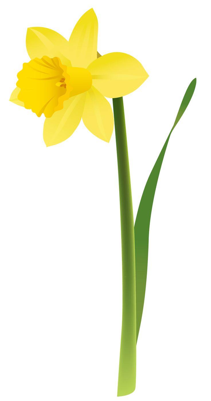 Spring Clip Art: Daffodil Clip Art Free - Cliparts.
