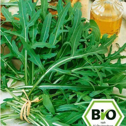 BIO-Rucola, Rauke,1 Pflanze Eruca sativa Rukolapflanze