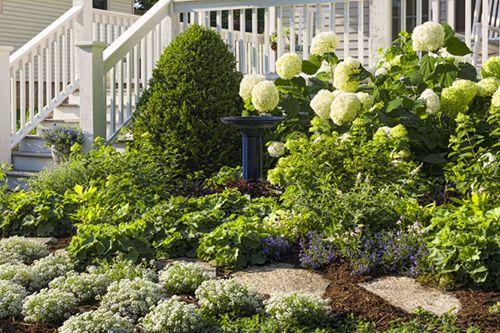 hydrangea paniculata little lime | Hydrangea 'Little Lime' Vs. Hydrangea 'Little Lamb' (Comparison)