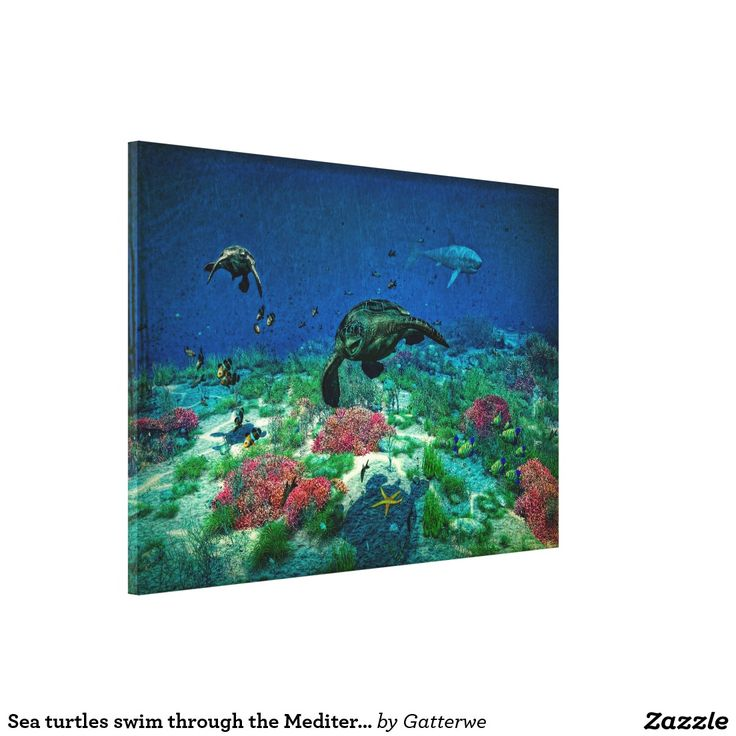 Sea turtles swim through the Mediterranean Sea Canvas Print 70% off with code CYBERMONSAVE