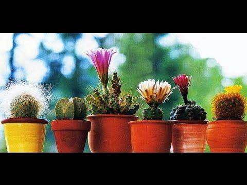 Шпаргалка: Кактусы и суккуленты из семян (проращивание и начальный уход)