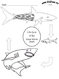 Lots of shark printables.  Dot-to-dot, mazes and crossword puzzles