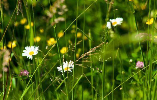 Erbe selvatiche commestibili: quali mangiare e raccogliere a marzo
