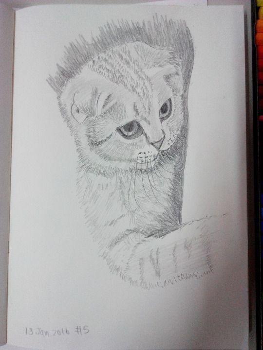 Cat sketching practice #005