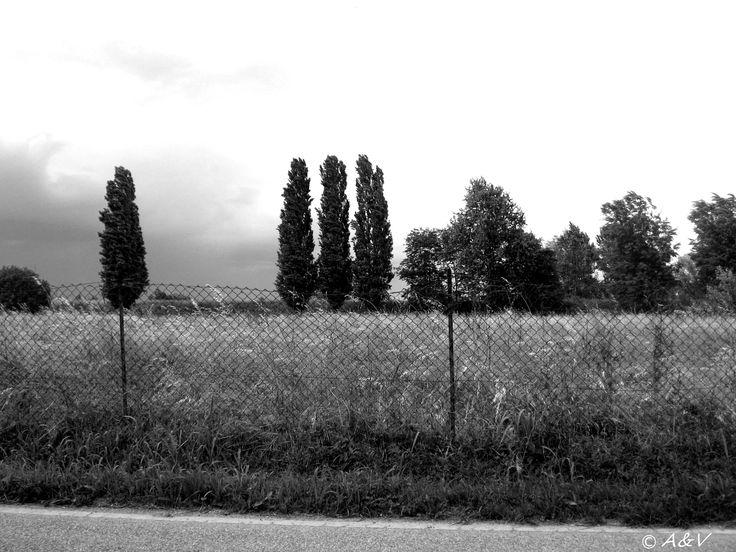 Vento. A&V ©2013