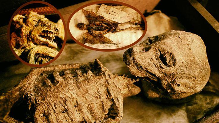 Cuerpos de extrañas criaturas míticas encontrados en sótano de una mansión del Reino Unido - http://codigooculto.com/2017/05/cuerpos-de-extranas-criaturas-miticas-encontrados-en-sotano-de-una-mansion-del-reino-unido/