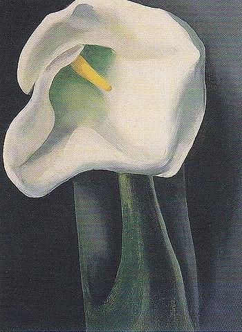 Georgia O'Keeffe. Calla Lily With Black 1923