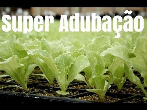 Super Adubação para Mudas(Crescimento ate 3x mais Rápido) - YouTube