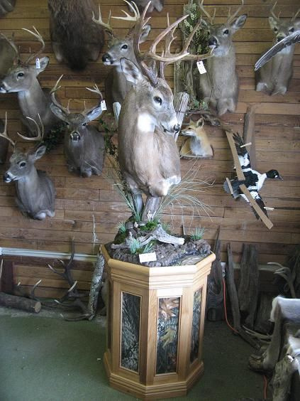 196 best images about bow hunting trophies on pinterest