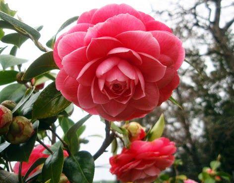 Ms de 25 ideas increbles sobre Jardines de flores silvestres en