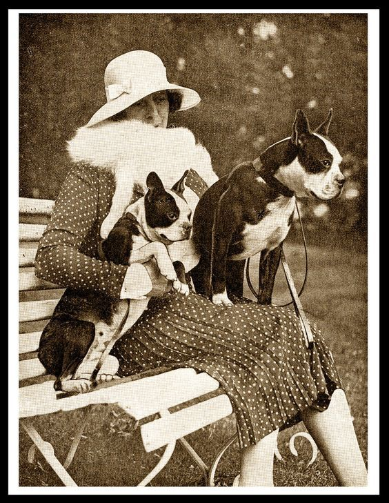 BOSTON TERRIER LADY AND HER DOGS LOVELY VINTAGE STYLE DOG PRINT POSTER