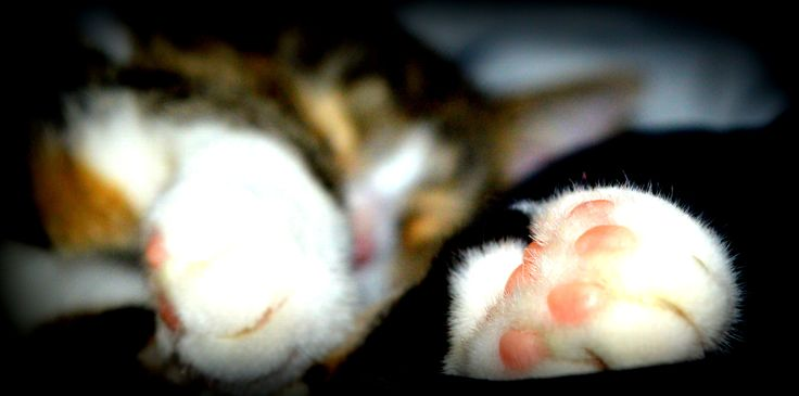http://frimousseenphotos.blogspot.be/