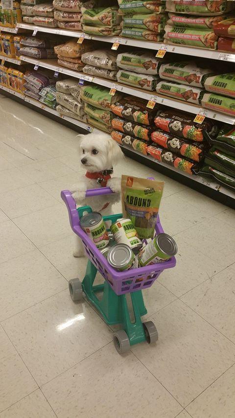 Zoe shopping