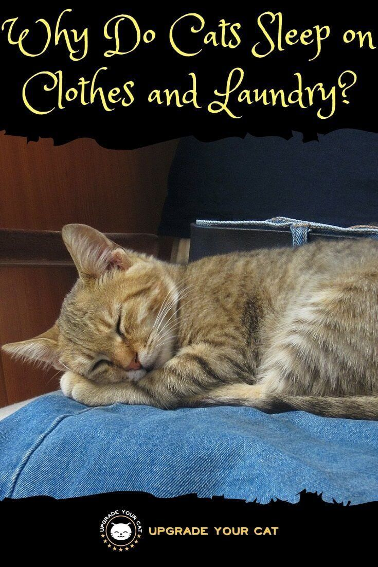 Why Do Cats Sleep On Your Clothes Several Reasons Explained Upgrade Your Cat Cat Behavior Cat Sleeping Cat Care
