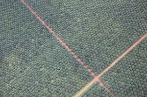 Palm Oil Giant Commits to More Sustainable Forestry Practices