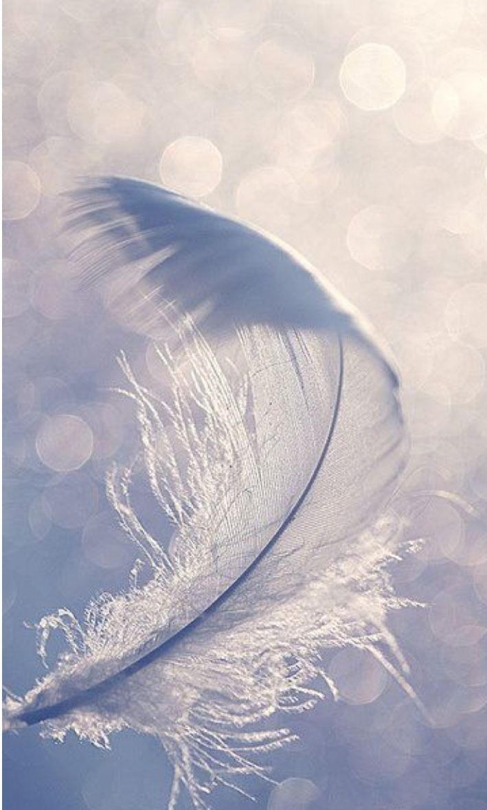 A feather from my wings