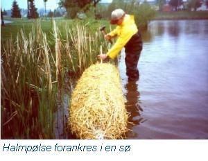 Sødoktoren - Halm kan bekæmpe alger i søer og i havedammen