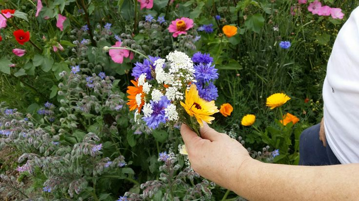 wildflower collecting