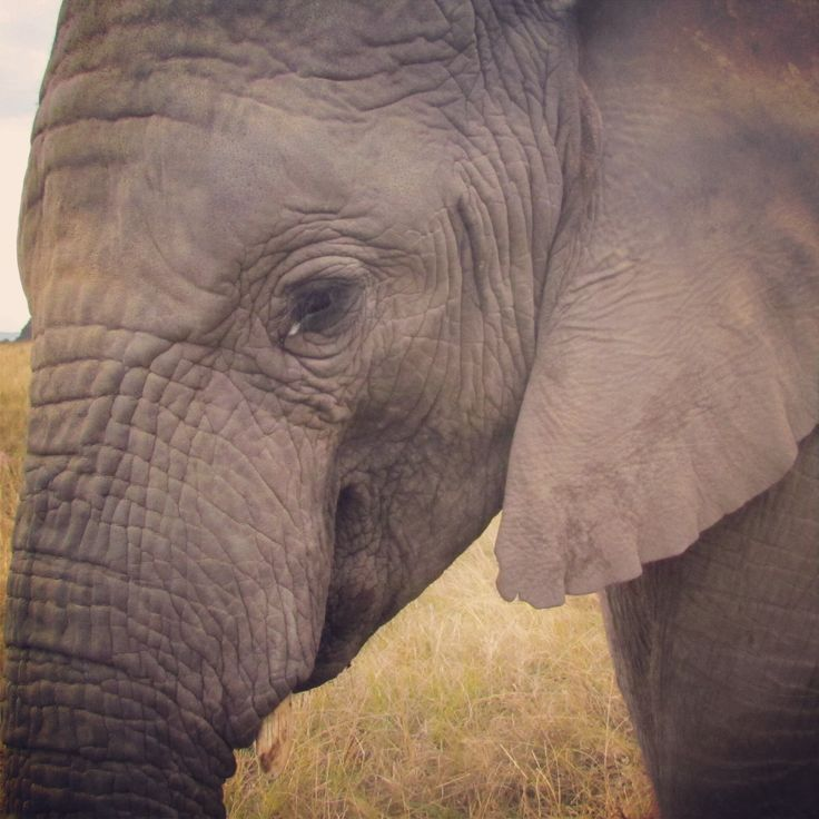 Elephant Parck, Knysna, South Africa