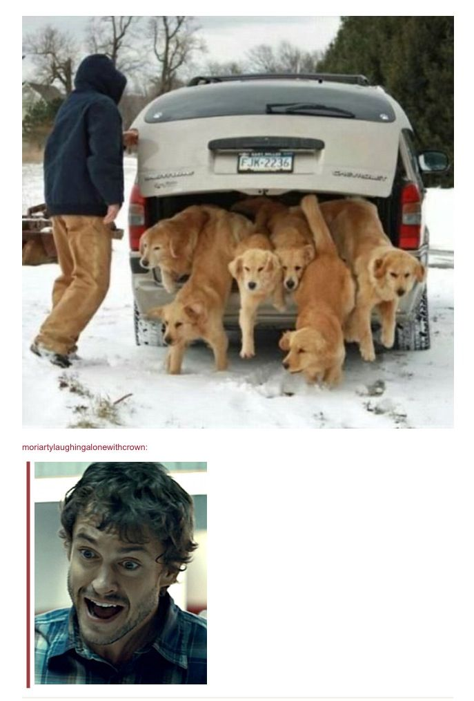 Will Graham is geeking! So am I!  BRING HOME ALL THE DOGS!!!