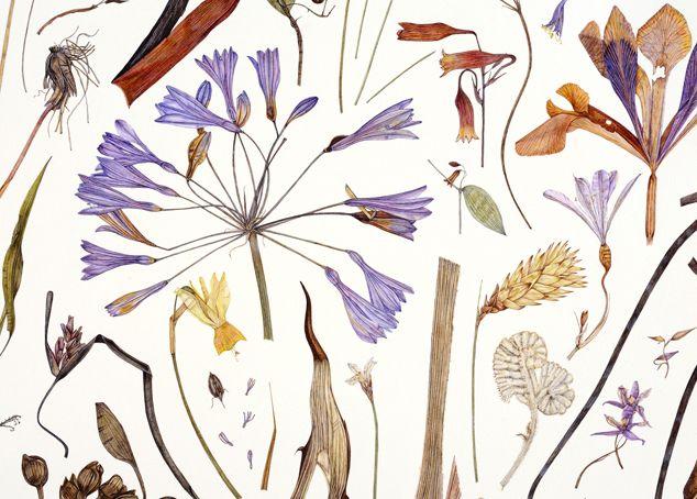 (via Herbarium Specimen Painting)