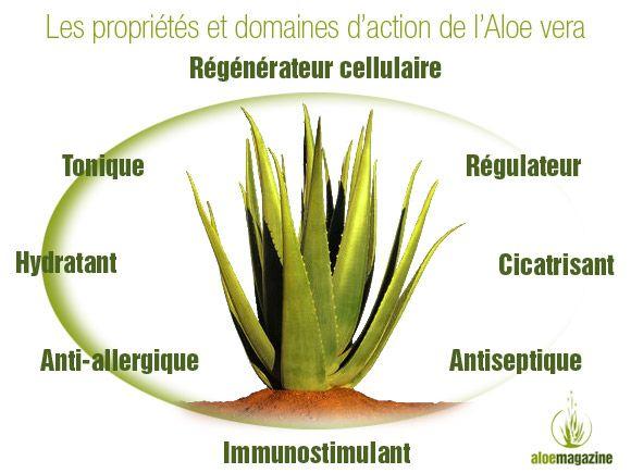 Les vertus et propriétés essentielles de l'Aloe vera