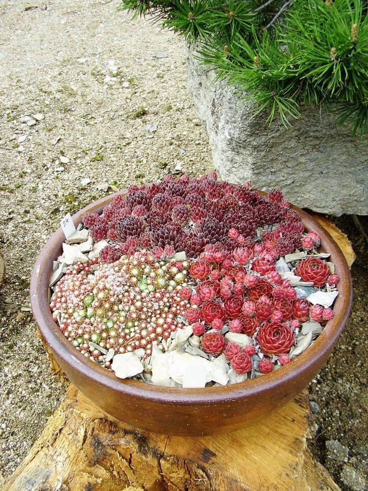 Rocaille jardin miniature dans un pot rond en argile avec for Garden idea et 700