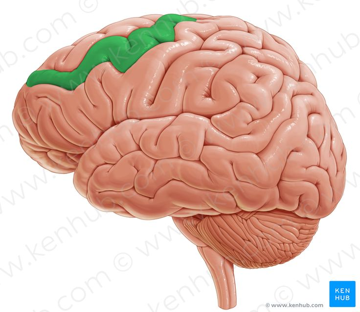 Middle frontal gyrus (средняя лобная извилина)