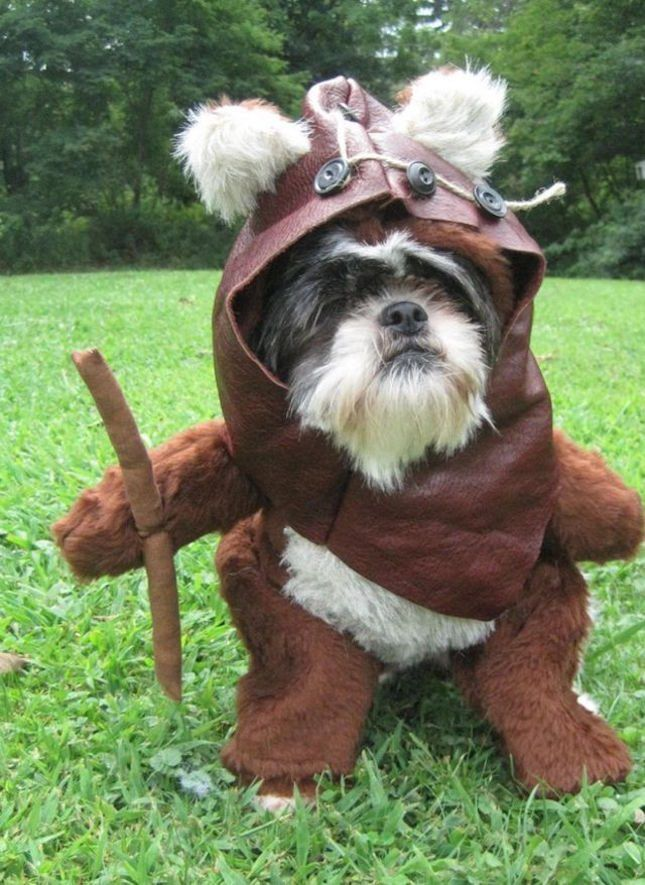 25 best ideas about ewok dog costume on pinterest names. Black Bedroom Furniture Sets. Home Design Ideas
