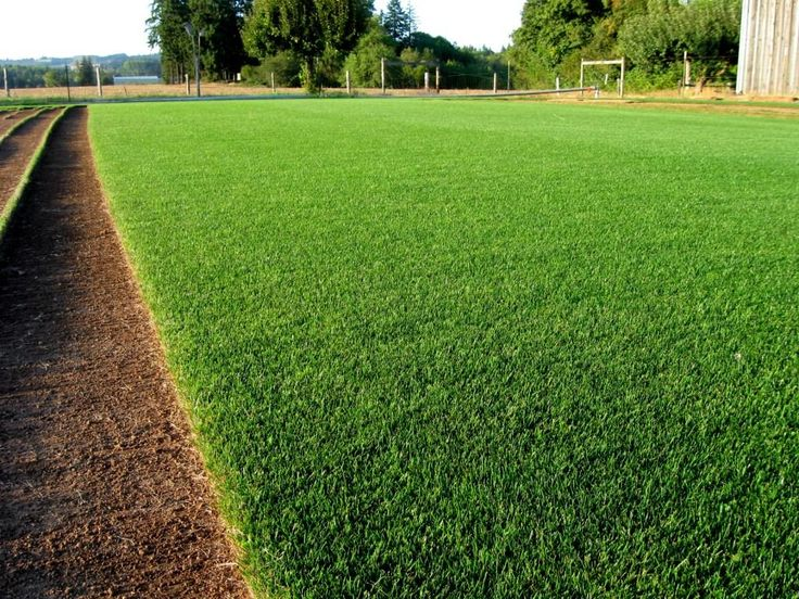 GROWING RYE GRASS --The drought has really done a number on my yard. In order to have something more than mud and dry weeds in the yard this fall and winter, I have decided to seed rye grass. Now I have never put ou...