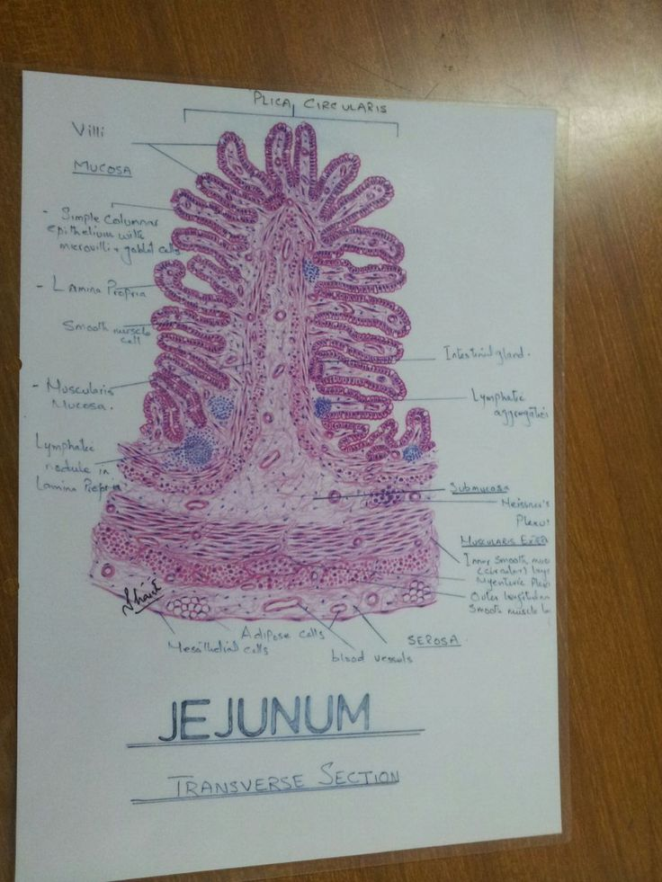 What is the study of human physiology