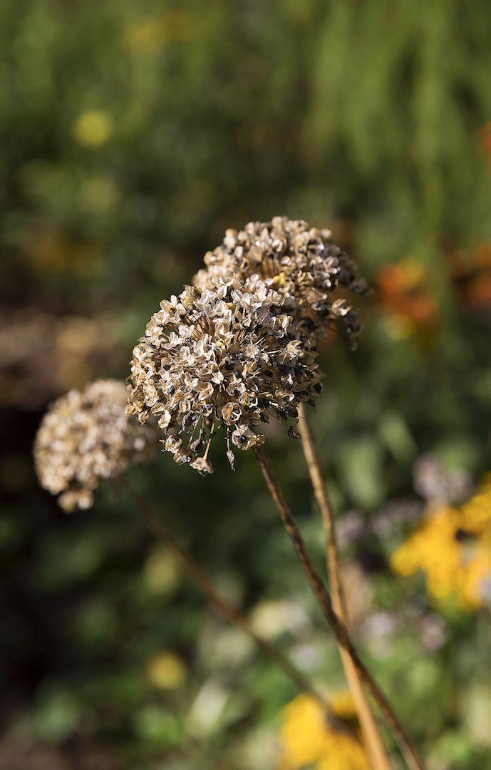 Осень в Грибановском саду.