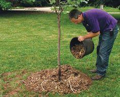 Сколько бы удобрений вы не внесли в посадочную яму, но все равно на третий год деревья надо снова подкармливать. А потом это нужно делать каждый год. Чем удобрять, мы расскажем в нашей статье.    Одно…