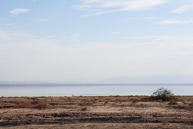 Silent Desert