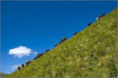Horseback Riding in Elbrus