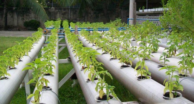 Les 25 meilleures id es concernant systeme hydroponique for Jardin hydroponique