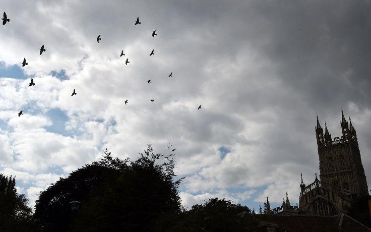 Dar de comer a los pájaros puede alterar sus hábitos migratorios