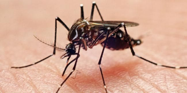 Gurgaon on Wednesday reported two new cases of dengue taking the total number of dengue cases to 15. these two new cases were reported from a private hospital in Gurgaon.