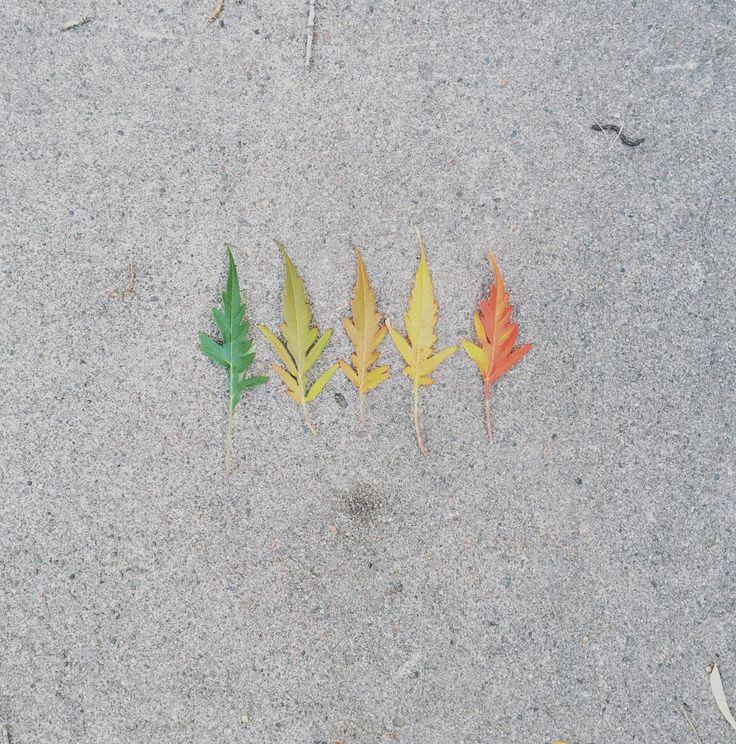 Hello October ○○○○○○○○○○○○○○○○○○○○○○○○○○○○○○○○○○○○○○○○○○○○○○○○○○○○○○○○○○○○○○○○○○○○○○○○○○○○○○○○○○○○○○○○○○○○○○○○○○○○○○○○ #nature #fall #fallcolors #changingleaves #leaves #autumn #artsy #instadaily #instalike #instamood #artoftheday #pantone #staywild #bohemian #getoutside #colorado #colorswatches #instaart #artoftheday #hippyshit #instadaily #instacool #tagsforlikes #instalike #love #instagramhub #sacred #earthamaze #earth #natureart