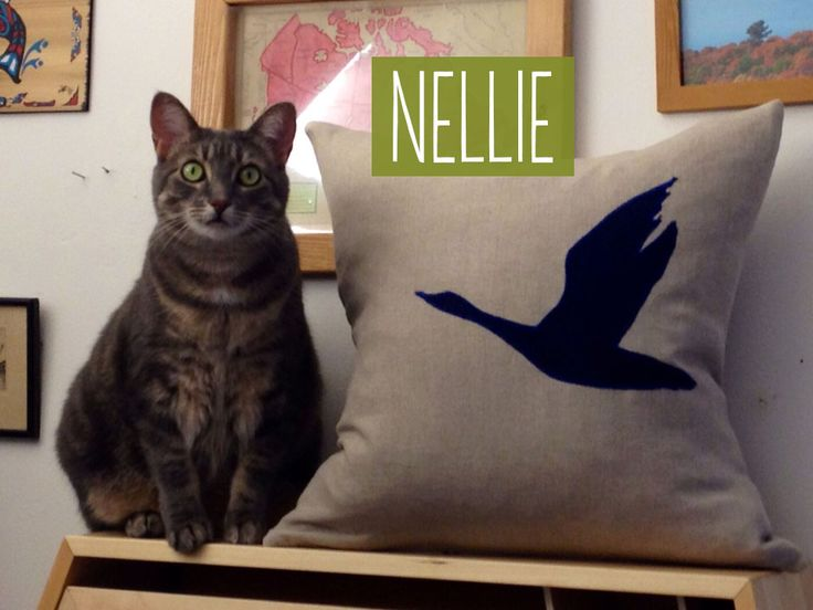 Meet Nellie, she loves our catnip!  https://www.etsy.com/ca/listing/195970735/certified-organic-catnip-cut-sifted?ref=shop_home_feat_2