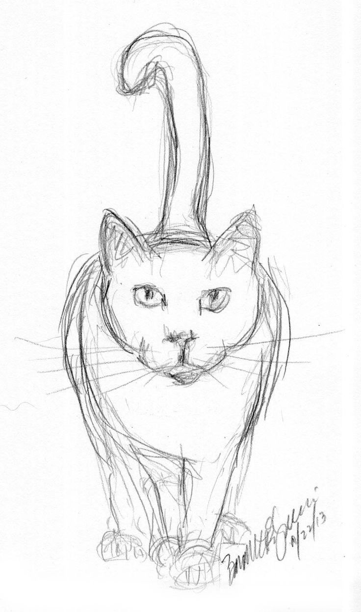 pencil sketch of cat