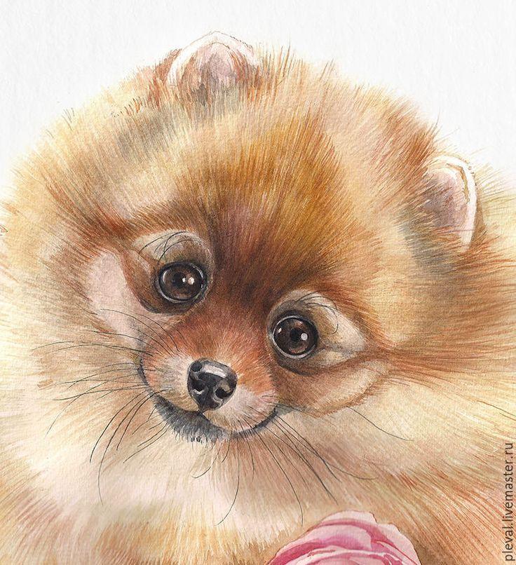 Купить Картина акварелью Роза для любимой - шпиц - белый, акварель, собака, картина с собакой