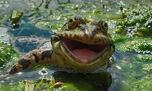A frog appears to have a big smile for the camera in Russia. The Comedy Wildlife Photography awards - in pictures