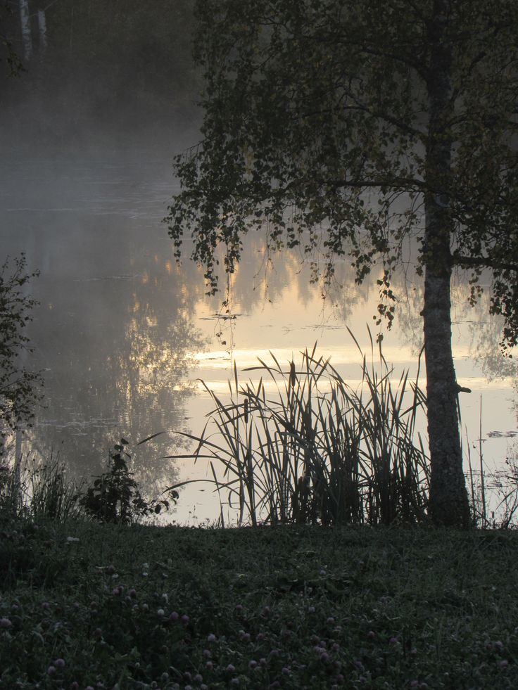 Morning mist at september. Viljakkala.~Finnish nature through my eyes - Sari Lapikisto