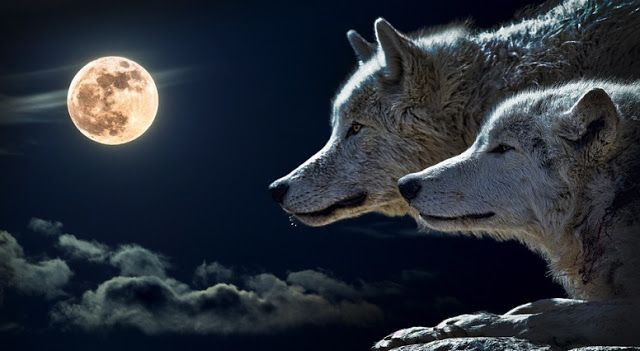 White Wolf : Full Thunder Moon: What You Need to Know About July's Full Moon