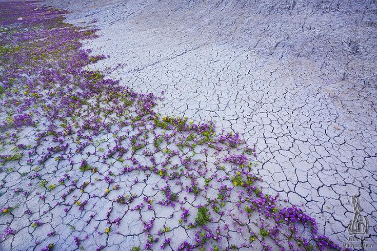 Aunque no lo creas, floreció el desierto de Atacama